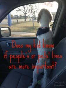 People vs. Pets
